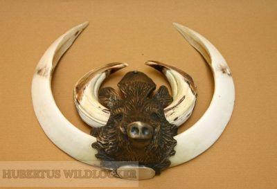 Keilerwaffenabdeckungen - Keilerhaupt  Bronzeguss HU-BR59